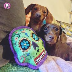 Look at these two lil monsters! Pet Boutique, Mini Dachshund, Pet Shop, Dog Toys, Sugar Skull, Just Love, Monsters, Dublin Ireland, Play