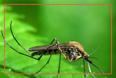 The risk of mosquito-borne diseases is high, especially in the humid regions. Mosquito's are harmful and they are responsible for several human deaths each year by spreading various dangerous diseases. . We at Citi Pest Control in Koregaon Park understand the habits of every mosquito species and also have a range of herbal solutions to deal with mosquito's.