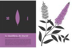 Natalie's Sketchbook: l'Herbier d'Emilie Vast