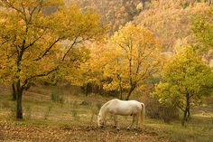 Camargue Horse In Autumn by RyanTaylor1986, via Flickr