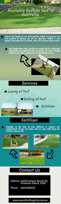 In the Australia a lot of many homeowners and businesses have picked the native Buffalo Grass for their terrain cover as it is the only grass that suits their craving for a green and easy to maintain lawn in dry surroundings.
