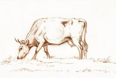Cow Drawing, Line Drawing, Drawing Sketches, Art Drawings, Drawing Reference, Cow Sketch, Grazing Cow, Cow Illustration, Free Illustrations