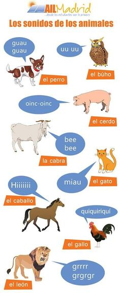 ¿Te has preguntado alguna vez que sonidos hacen los animales en I was JUST taking about this with my Au Pair! I'd love to know what other, non-romance languages, say for each animal! Spanish Basics, Spanish Culture, Spanish English, Spanish Lessons, Spanish Vocabulary, Spanish Language Learning, Teaching Spanish, Vocabulary Games, Spanish Teacher