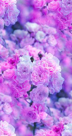 Imagen de flowers and pink