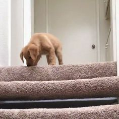 Puppy learns how to use the stairs http://ift.tt/2mlpN5V