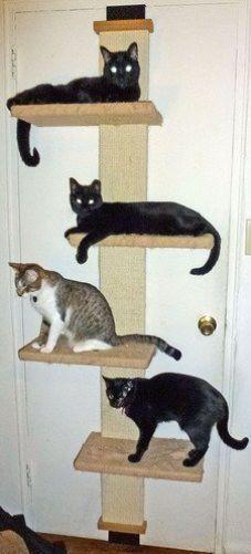cat climber multi level tree scratch sleep hanging play wall door mount kitten - Cat Climber