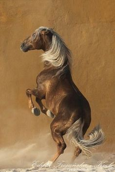 Lusitano horse - by denizkilincalp
