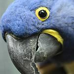 eco station is an exotic animal sanctuary in Culver City that lets you get close to exotic animals.