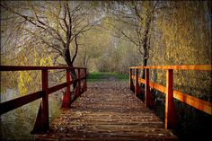 Kiszely István  Velegi úti horgásztavon lévő híd.... November... (Mór, Ezerjó-horgásztó) Több kép Istvántól: www.facebook.com/istvan.kiszely