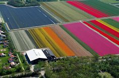 With the help of pilot Claython Pender, French photographer Normann Szkop took to the skies in a Cesna to capture the blooming tulip fields in Anna Paulowna, a town in North Holland.The tulip has come to be a loved symbol of the Netherlands. Many tourists visit the country just to see the bright coloured flower and the astonishing view over the bulb fields.