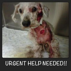 Severely neglected dog rescued from Arizona shelter# staying focused to help animals#help this baby of GOD
