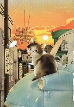 https://flic.kr/p/d6bA2N   Muramatsu Cat 25   Makoto Muramatsu Cats Postcards Collection  one for sarkka one for Minta as Vacation RR G75