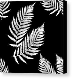 Fern Pattern Black And White Acrylic Print by Christina Rollo. All acrylic prints are professionally printed, packaged, and shipped within 3 - 4 business days and delivered ready-to-hang on your wall. Choose from multiple sizes and mounting options. Canvas Art Prints, Framed Art Prints, Fine Art Prints, Black And White Canvas, Thing 1, White Acrylics, Pattern Art, Ferns, Artwork