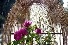 Tree Peony, Peony Print, Kyoto, Botanical Gardens, Peonies, Glass Vase, Decor, Decoration, Decorating