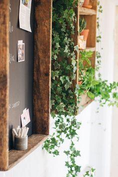 Indoor Ivy