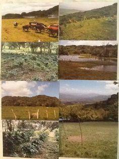 FARM SALE BEAUTIFUL 1,826,760.00 square meters IN NICARAGUA.   7Emirate
