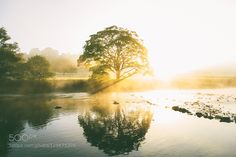 Golden Treeflections by daniel-casson1 (PHOTO ONLY)