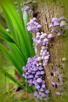 God's family of fungi are even pretty in their own right. Mushroom Art, Mushroom Fungi, Mushroom Species, Tiny Mushroom, Wild Mushrooms, Stuffed Mushrooms, Edible Mushrooms, Mushroom Pictures, Slime Mould