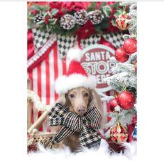 Christmas Dachshund, Beautiful Christmas, Christmas Ornaments, Holiday Decor, Christmas Jewelry, Christmas Decorations, Christmas Wedding Decorations