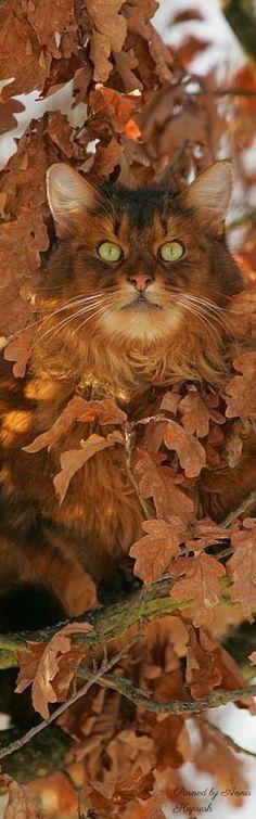 Cat's Autumn camoflauge