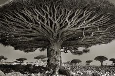 San Francisco based photographer Beth Moon has spent fourteen years capturing haunting images of ancient trees around the world.