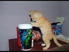 Смешное видео про котов и кошек Funny video about cats