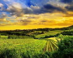 Hills of Vienna, Austria Ultra Tapeta HD Best Mobile Phone, A Year Ago, Landscape Wallpaper, Sunset Sky, Past Life, Night Skies, Sky Night, Embedded Image Permalink, Hd Wallpaper