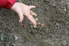 La prima semina nell'orto