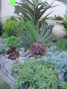 Succulent flower bed maybe with some big blooming flowers for Low maintenance plants for flower beds