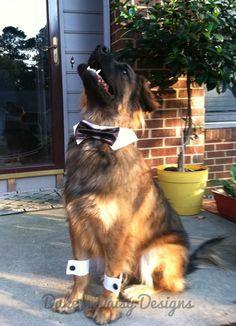 Black Dog Bow Tie Collar & Cuff Set Black by DukeNDaisyDesigns