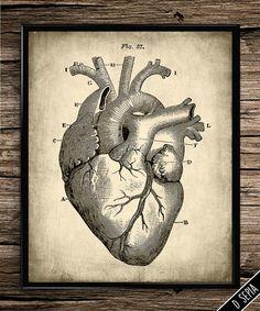Vintage Heart Anatomy Vintage Heart Anatomy   Cardiac   Human Body   Anatomy Poster   Anatomy Decor   Medical Poster   Heart   Vintage  