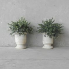 Olive trees in Marble Urns - Chateau Domingue