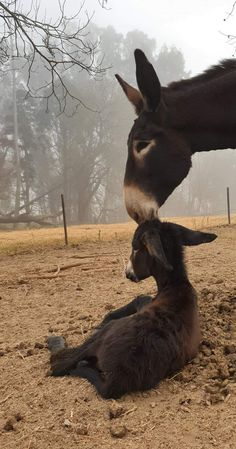 - My list of the most beautiful animals Most Beautiful Animals, Beautiful Creatures, Funny Animal Pictures, Cute Funny Animals, Farm Animals, Animals And Pets, Mother And Baby Animals, Nature Story, Cute Donkey