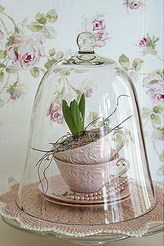 Use a glass bell to keep bulbs warm and help them flower.