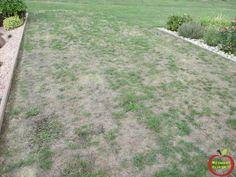 Enlever Mauvaise Herbe : les 79 meilleures images du tableau mauvaises herbes vigne sur pinterest jardins mauvaises ~ Nature-et-papiers.com Idées de Décoration