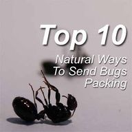 Top 10 Natural Ways To Send Bugs Packing