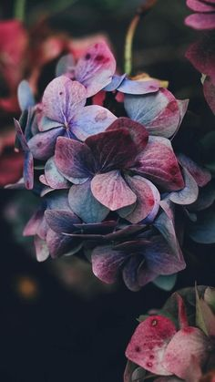 Ideas Flowers Photography Wallpaper Inspiration Flora For 2019 Wallpaper Flower, Iphone Wallpaper, Nature Wallpaper, Cellphone Wallpaper, Food Wallpaper, Travel Wallpaper, Pink Wallpaper, Inspirational Wallpapers, Cute Wallpapers