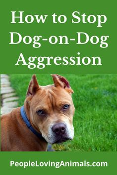 How to Stop Dog-on-Dog Aggression Dog aggression toward other dogs, dog aggressive toward other dogs, canine aggression, dog dog aggression, dog on dog aggression in the home, dogs don't get along, dogs fighting, Dog Training Leash Training, Dog Training Videos, Training Your Dog, Aggressive Dog, Dog Barking, Pet Lovers, How To Train Your, Pet Care, Dog Cat