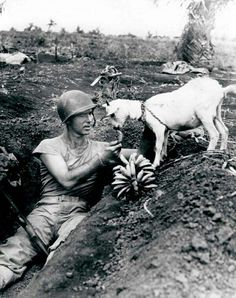A soldier shares his banana with a goat during the battle of Saipan ca 1944.