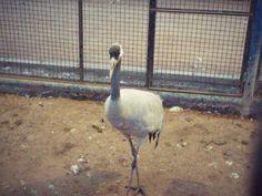 A bird ...
