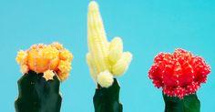 Skurril! Diese Pflanzen sind absoluter Dekotrend #News #Wohnen