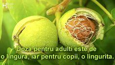 Retete Vindecatoare cu NUCI VERZI The Creator, Fruit, Healthy, Medicine, Therapy, Varicose Veins, Health And Wellness, Health