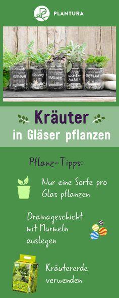 Kräuter im Glas pflanzen: Video-Anleitung & Tipps #kleinekräutergärten Anzeige: Kräuter in Gläser pflanzen: Ein Kräutergarten auf dem Fensterbrett? Wir zeigen Euch, wie Ihr Kräuter ganz einfach und sogar noch äußerst dekorativ in Gläsern pflanzen könnt. Mehr hilfreiche Tipps dazu findet Ihr bei Plantura. #kräuter #gläser