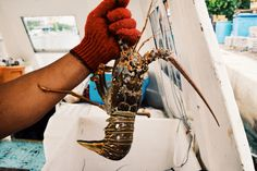 Lobster high five