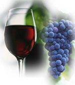 wine pairings with food