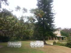 Lone Pine Lawn, Vaucluse House, Sydney  Photo by: Lillian Lyon Marriage Celebrant www.lyonheart.com.au Places To Get Married, Got Married, Wedding Sites, Marriage Celebrant, Lone Pine, Sydney Wedding, How To Take Photos, Lyon, Wedding Ceremony