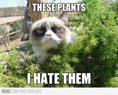 Grumpy cat goes outside. I love grumpy cat.