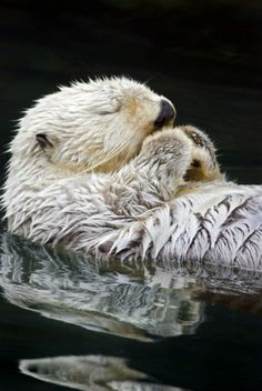 Cute otter pictures