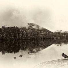 Photograph Ducks on Numedalriver by Lidia, Leszek Derda on Mount Rainier, Places To Visit, Waves, Explore, Mountains, Ducks, Nature, Photograph, Profile