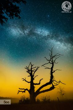 Universe over the tree by Lukasz Ogrodowczyk on 500px